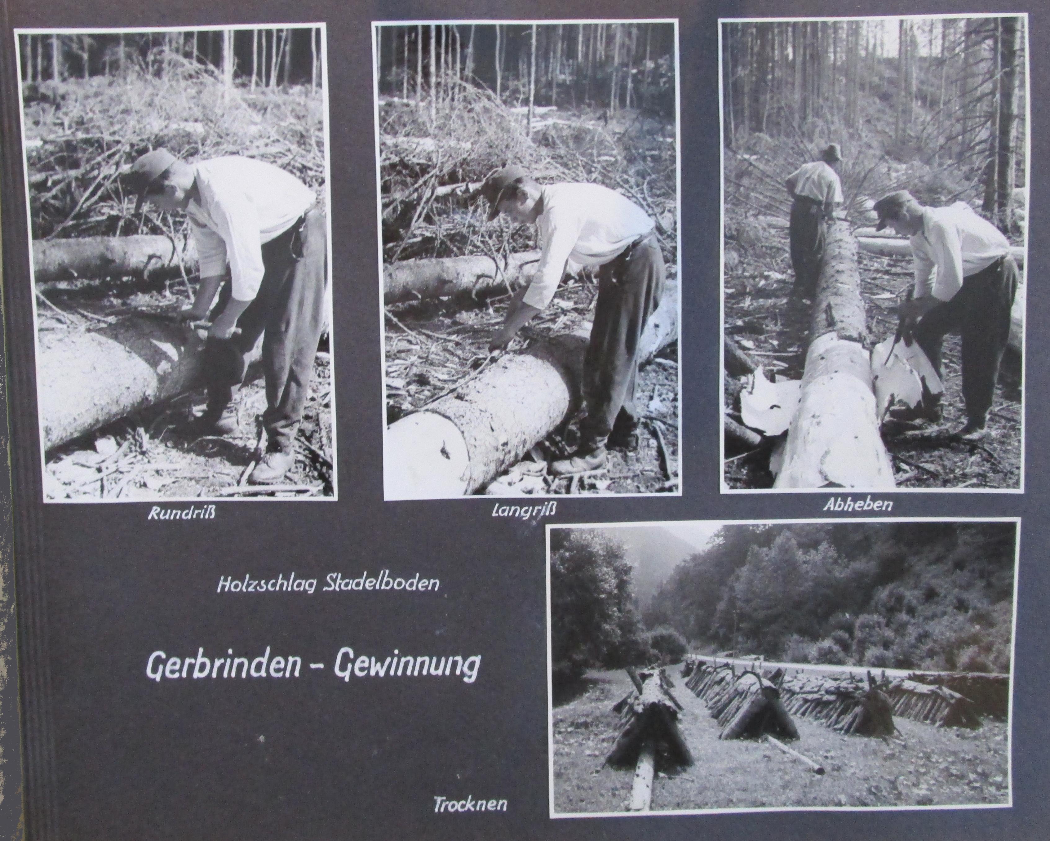 Photos der Gerbrinden-Gewinnung, Holzschlag Stadelboden