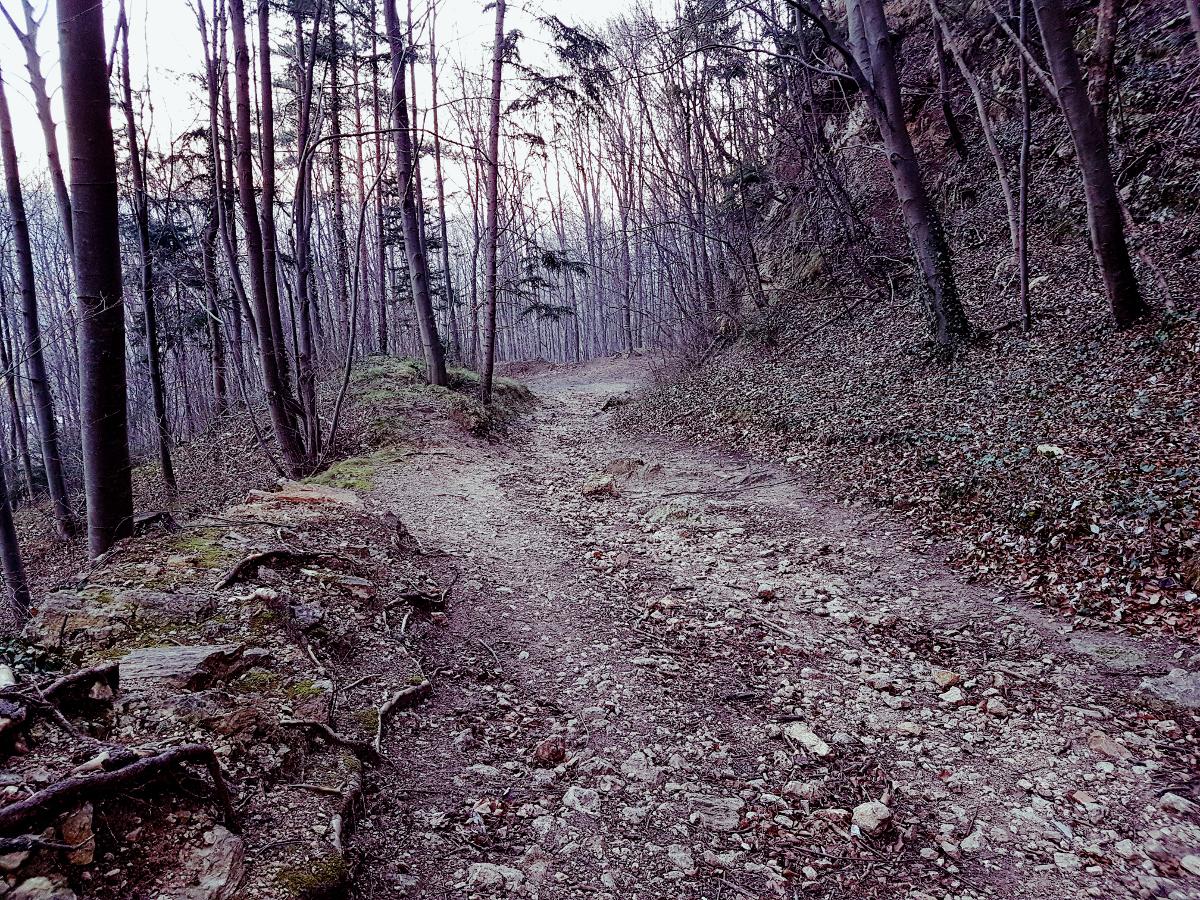 Wald im Nostalgiemodus.