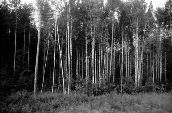 Thomas Claveirole: Chute #3, train 110, Russie, juillet 2010. Flickr, CC-BY-SA. Schwarz-Weiss-Bild eines Walds in Russland
