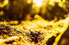 Farbphotographie, Detailaufnahme eines Walds im goldgelben Sonnenlicht