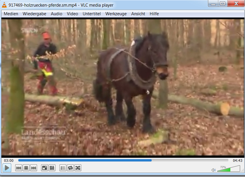 Screenshot SWR-Sendung Landesschau Baden-Württemberg: Holzrücken mit Pferdestärke, Jänner 2018