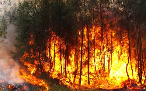 Farbphoto, brennender Wald