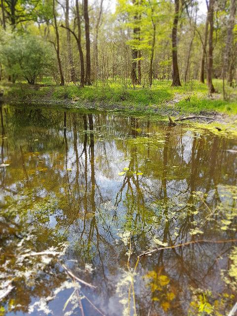 Farbphoto: Wasser, in dem sich Baeume spiegeln