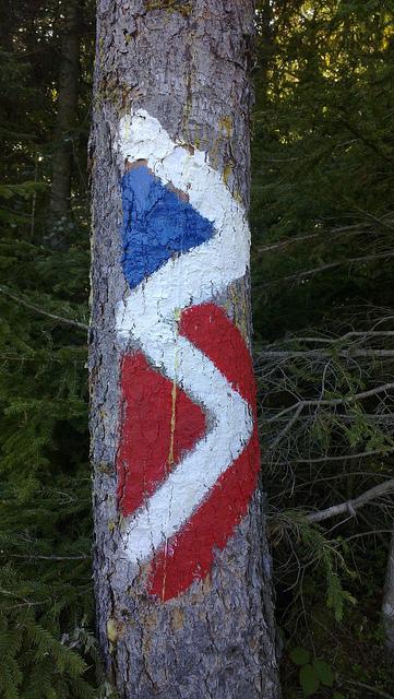 Markierungen: Farbphoto: Baum mit blau-weiss-roter Markierung