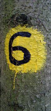 Markierungen: Farbphoto: Baum mit schwarz-gelber Markierung, Ziffer 6