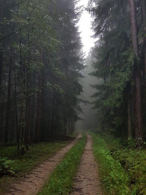 Waldweg im Nebel - Ramplach