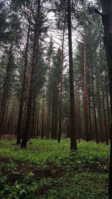 Wald, Bäume