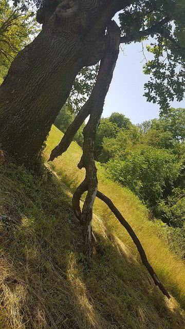 Baum in Eckartsau im Nationalpark Donau-Auen