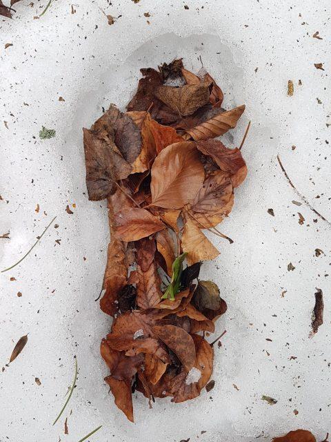 Fussabdruck im Schnee, mit Laub befüllt