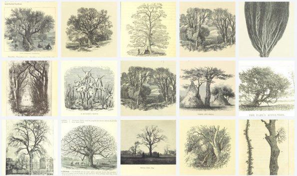 Fünfzehn Zeichnungen von Bäumen aus dem Bestand der British Library